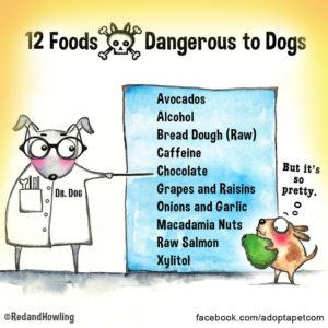 Twelve Foods Dangerous To Dogs