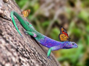 Green And Purple Lizard With Butterfly