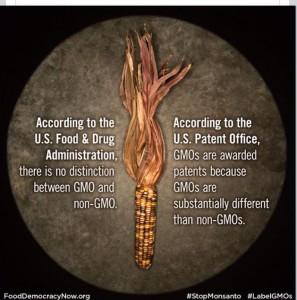 GMO vs Non GMO