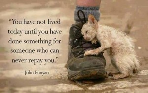 You Have Not Lived...