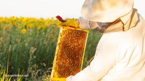 Bee-Keeper-Exam-Honey-Comb-Tray