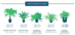 Air Filtering Plants