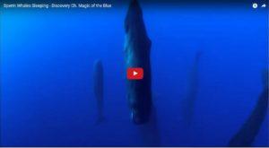 Whales Sleeping Upside Down