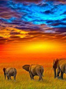 Elephant Sky