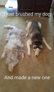 Fur Dog